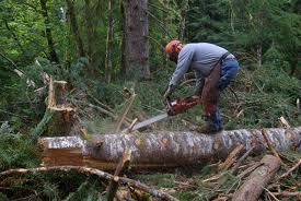 Norwegia praca w lesie